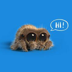 Lucas The Spider – # – Natani - Baby Animals Lucas The Spider, Baby Animals, Cute Animals, Pet Spider, Jumping Spider, Emo Girls, Cute Creatures, Cute Disney, Graphic Design Illustration