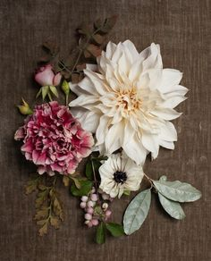 Dahlia, anemone and peony floral flatlay My Flower, Beautiful Flowers, Spray Roses, Arte Floral, Carnations, Dahlias, Floral Arrangements, Flower Arrangement, Planting Flowers