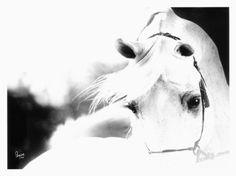 Arabian Horse Show - Western Competition Egyptian Stallion Breeding