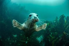 #concurso #prêmio #fotografia #vidaselvagem #animal #reinounido