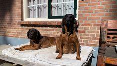 Dogs, Animals, Mountain Range, Pet Dogs, Animales, Animaux, Doggies, Animal, Animais