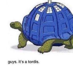 """TARDIS tortoise """"tordis"""""""