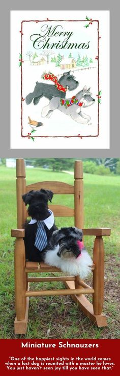 """""""Some people don't understand why my dog means so much to me. That's ok. My dog does."""" #miniatureschnauzer"""