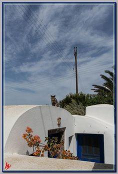 Φωτογραφία της εβδομάδας: Φουρόγατος στην Φοινικιά | Atlantea