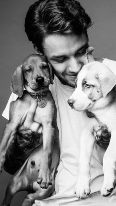 liam payne I love little puppies they are so cute! But I think Liam is cuter than the puppies! Liam James, Liam Payne, Liam 1d, Niall Horan, One Direction Harry, One Direction Photos, Foto One, Black And White Aesthetic, Little Puppies