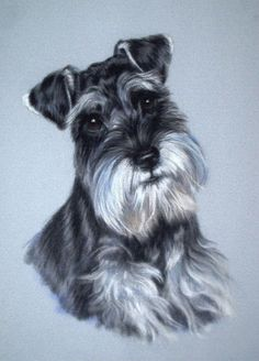 Very devoted Mini Schnauzer.  Very sweet.