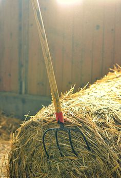 You know you are country, when you see a picture like this and can SMELL the hay, leather and horses. YUP!