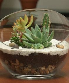 A terrarium, a mini open-air tabletop garden, is a fun and easy way to add a little greenery to any indoor space. You can make your own in just 20 minutes.