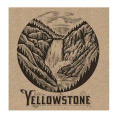scratchboard illustration yellowstone - Google Search