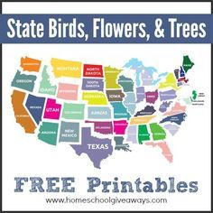 state birds printable, state trees printable, and state flowers printable Us Geography, Geography Lessons, Teaching Geography, Geography Activities, Usa Wallpaper, States And Capitals, State Birds, Travel Nursing, Nursing Career