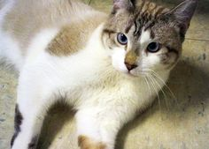 Theo 6317 Needs a good home! CatsExclusive.org Fixed, vaccinated, negative for FIV/FeLV/HW, de-wormed, de-fleaed.