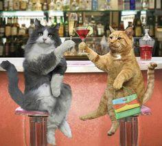 30 fotos graciosas de gatos