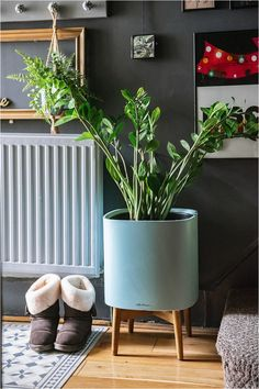 2-types-self-watering-planters-lechuza-pon-product-review Dark Grey Hallway, Dark Green Living Room, Green Lounge, Plant Diseases, Dark Blue Green, Self Watering Planter, Eclectic Living Room, Small Plants, Product Review