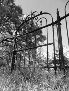 black and white, vintage, gate, old, cemetery, photography, kalani photography, bloodspot, trees, nature, rust, grass