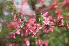 © Lumi Poullaouec - www.lumi.me LA SYLPHIDE DE PRINTEMPS   #illustration #photographie #photography #fairy #fée #Sylphide #flower #nature #idea #photoshop