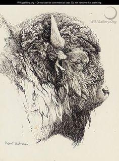 Bison Head - Robert Bateman