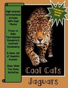 Jaguars are cool cats! Students will learn about these endangered cats with this complete nonfiction resource pack.   There are a variety of student activities included in this unit.  Anticipatory Guide True/False Predictions with check-n-correct either after reading the mini-book or at the end of the unit.
