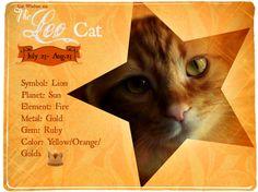 Leo cat astrology