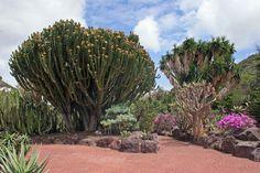 Jardín Botánico Viera y Clavijo. / Autor: Manuel Quevedo.