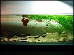 Das gefilterte Aquarium ohne Filter :) - Achtung, Bilder - Aquarium Forum