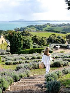 This Island Was Named the Fifth Best in the World—Here's Why It's Extraordinary, New Zealand Travel Route, Top Travel Destinations, Amazing Destinations, Places To Travel, Oh The Places You'll Go, Places To Visit, North Island New Zealand, Waiheke Island, Vacations To Go