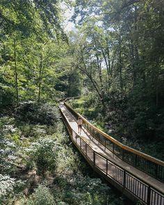 Toronto's Glen Stewart Park Trail Is A Hidden Oasis Boardwalk Trail - Narcity Park Trails, Hiking Trails, Burlington Ontario, Ontario Travel, Canadian Travel, Beach Boardwalk, Road Trip With Kids, Get Outdoors, Beautiful Landscapes
