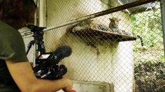 Michael Sanderson for BBC - Jungle Animal Hospital