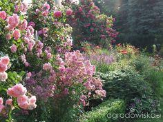 Kolorowy ogród na piasku - strona 523 - Forum ogrodnicze - Ogrodowisko Plants, Plant, Planets