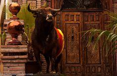 Bull in restaurant in Old Town