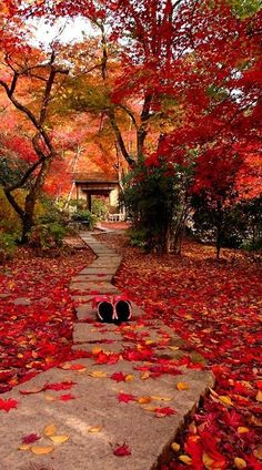 Autumn in Kyoto, Japan. Kyoto is a city located in the central part of the island of Honshu. Beautiful World, Beautiful Places, Beautiful Pictures, Art Asiatique, All Nature, Autumn Nature, Autumn Leaves, Japan Travel, Japan Tourism