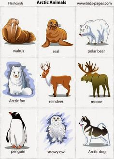 Arctic Animal flashcards - Kids Pages - Animals 3 Animal Activities, Animal Crafts, Winter Activities, Preschool Winter, Artic Animals, Animals For Kids, Kids Pages, Preschool Themes, Preschool Education