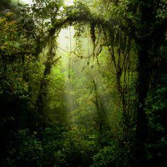 Portal. Rainforest, Monteverde, Costa Rica.