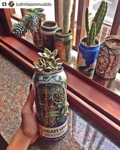 Aproveitando latas de cervejas especiais para decorar 🌱