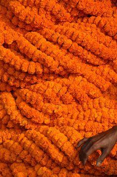 COLOUR (marigolds, India)