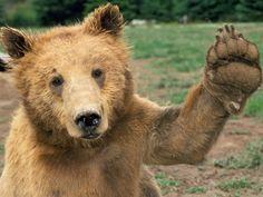 cute animal pictures | 23 Cute Animal Wallpaper Cute-animal-hd-4 – Free Wallpaper Spot