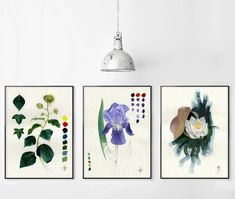 Set of 3 prints, botanical country home decor for living room or kitchen, sustainable wall art.  I painted the original artworks with eco paints and sustainable materials. All my artworks are strictly CRUELTY FREE: they do not contain substances of animal origin such as bone or rabbit skin glue. No