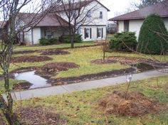 Experiment in Permaculture - transforming a suburban yard with rain gardens, berms and water catchment and edible plantings.