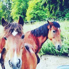 Instant better morning  #horse #horses #horseoftheday #horsesofinstagram #instahorse #instagramhorses #instapet #petsofinstagram #petoftheday #instagrampets #equestrian #equestrianlife #horsebackriding #horseriding #hackney #hackneyhorse #horselove #ilovemyhorse #demonpony #hackneypony #mylittlepony #ponychild