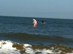 easter bunny on sup Easter Bunny