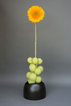 I used Balloon cottonbush (Gomphocarpus physocarpus) for the mass and a single sunflower for line in this arrangement. The flowers were purchased at the Penn Quarter farmer's market from Wollam Gardens. Ikebana Flower Arrangement, Ikebana Arrangements, Beautiful Flower Arrangements, Floral Arrangements, Beautiful Flowers, Exotic Flowers, Purple Flowers, Japanese Flowers, Japanese Art