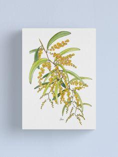 'Australian Wattle Flower, Illustration' Canvas Print by JRoseDesign Australian Native Flowers, Free Stickers, Vibrant Colors, Print Design, Canvas Prints, Illustration, Artwork, Artist, Cosmetics