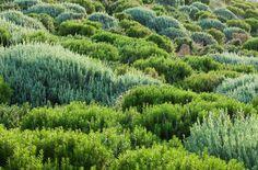 Thomas Doxiadis landscape, Clive Nichols photo. Gardenista