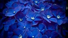 flower, flower wallpapers, flower desktop wallpapers, best flowers ...