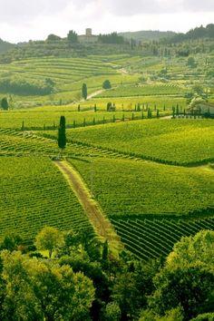 Vineyeard in Chianti, Toscany, Italy,