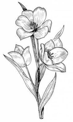 53 trendy Ideas for flowers sketch outline coloring pages Colouring Pages, Adult Coloring Pages, Coloring Books, Pencil Art Drawings, Easy Drawings, Doodle Drawing, Floral Drawing, Flower Sketches, Plant Drawing