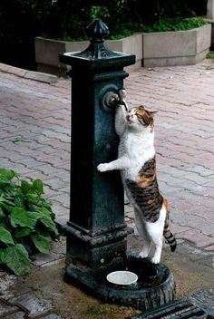 Watering hole in the street