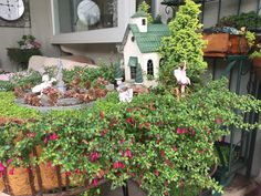 Miniature Fairy Garden - IN AWE has spring fuchsia blooms; the tiny flowers are wrapping to the front of the village church. Hummingbirds delight in them! 5/26/2016