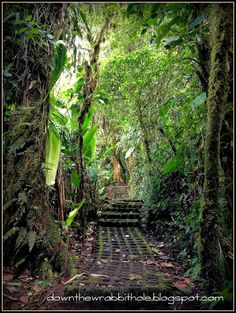 """Beautiful hiking in the Monteverde Cloud Forest in Costa Rica. Find out more at """"Down the Wrabbit Hole - The Travel Bucket List"""". Click the image for the blog post."""