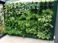Deverticale tuin staat op dit moment erg in de belangstelling om diverse redenen.Veel groenbeleving op een kleine oppervlakte is een groot voordeel van een verticale tuin.Met name voor mensen die in een stad wonen, op een flat of in een woning zonder tuin, kan een verticale tuin een mooie oplossing zijn.De professionele verticale tuinen zijn vaak erg kostbaar en vragen specialistisch onderhoud.The Vertical Green Company kan nu een Doe-Het-Zelf systeem leveren waarbij u betrekkelijk…