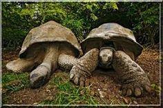"""Résultat de recherche d'images pour """"tortues des galapagos"""""""